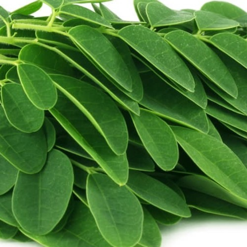 Moringa leaves up close
